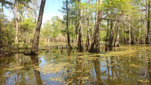 energy transfer partners actchafalaya basin bayou bridge pipeline