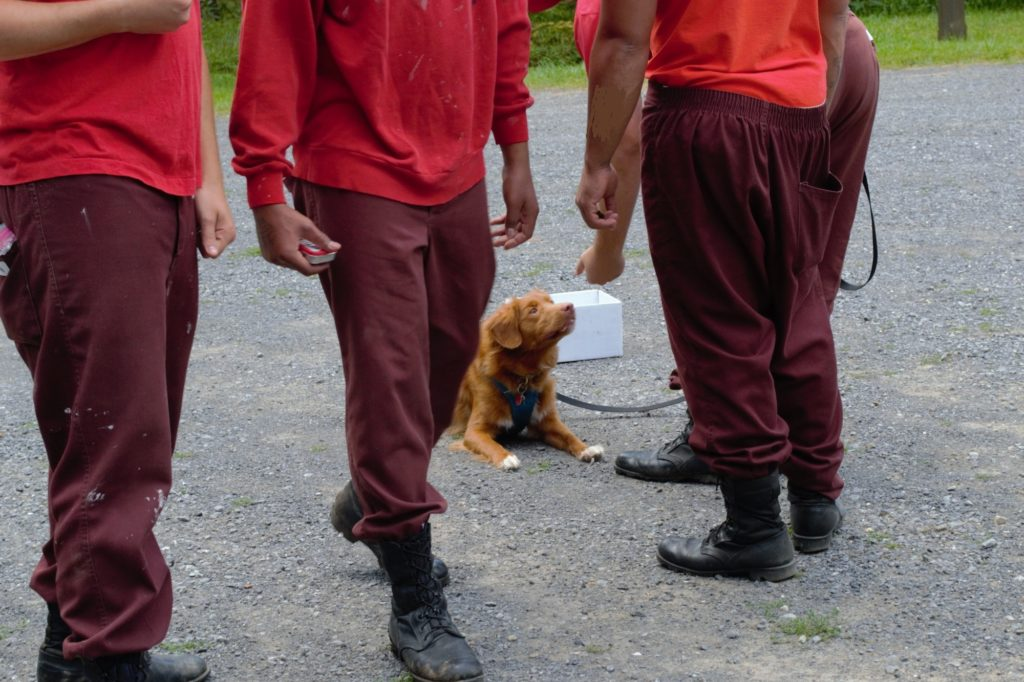 """Quehanna boot camp inmates warm up to the Middle Susquehanna Riverkeeper's amazing water-quality canine """"Sussey."""""""