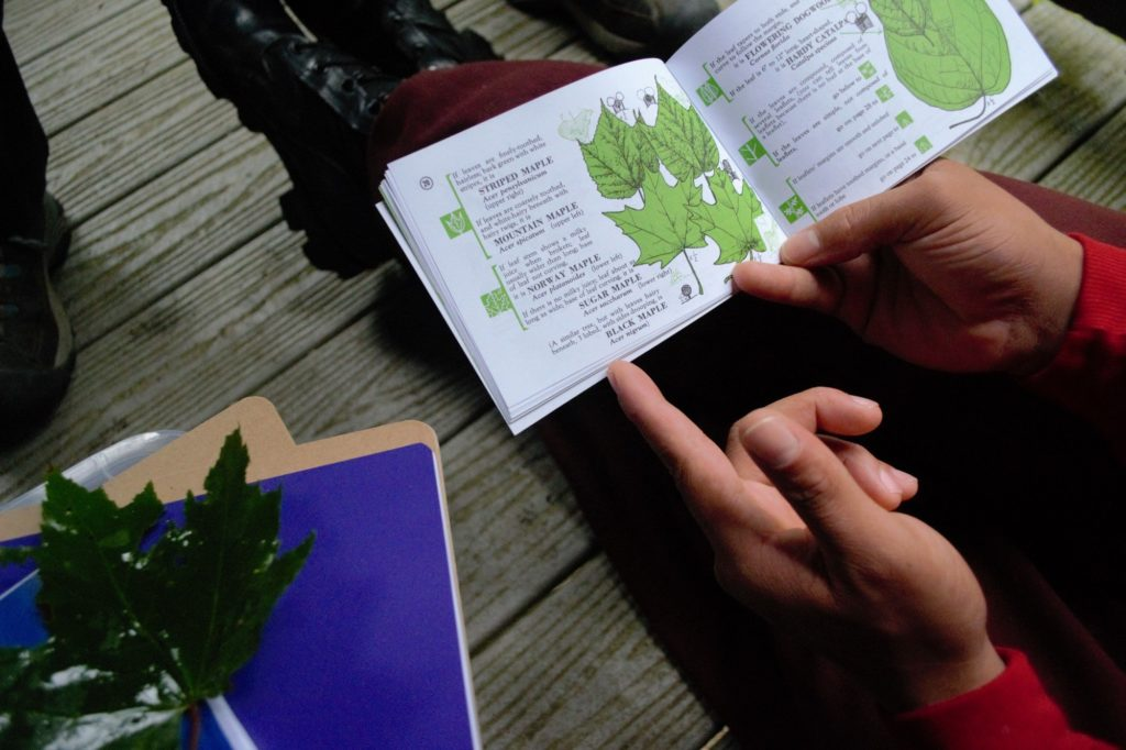Someone sitting down reading a book about plants.