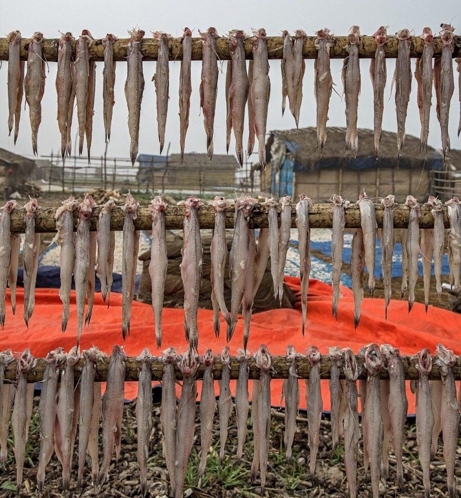 Poissons morts qui ont chassé suspendu à une poutre en bois.