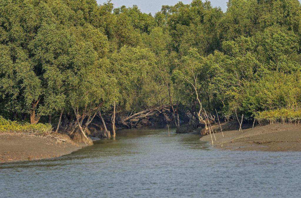 Une forêt entoure un plan d'eau.