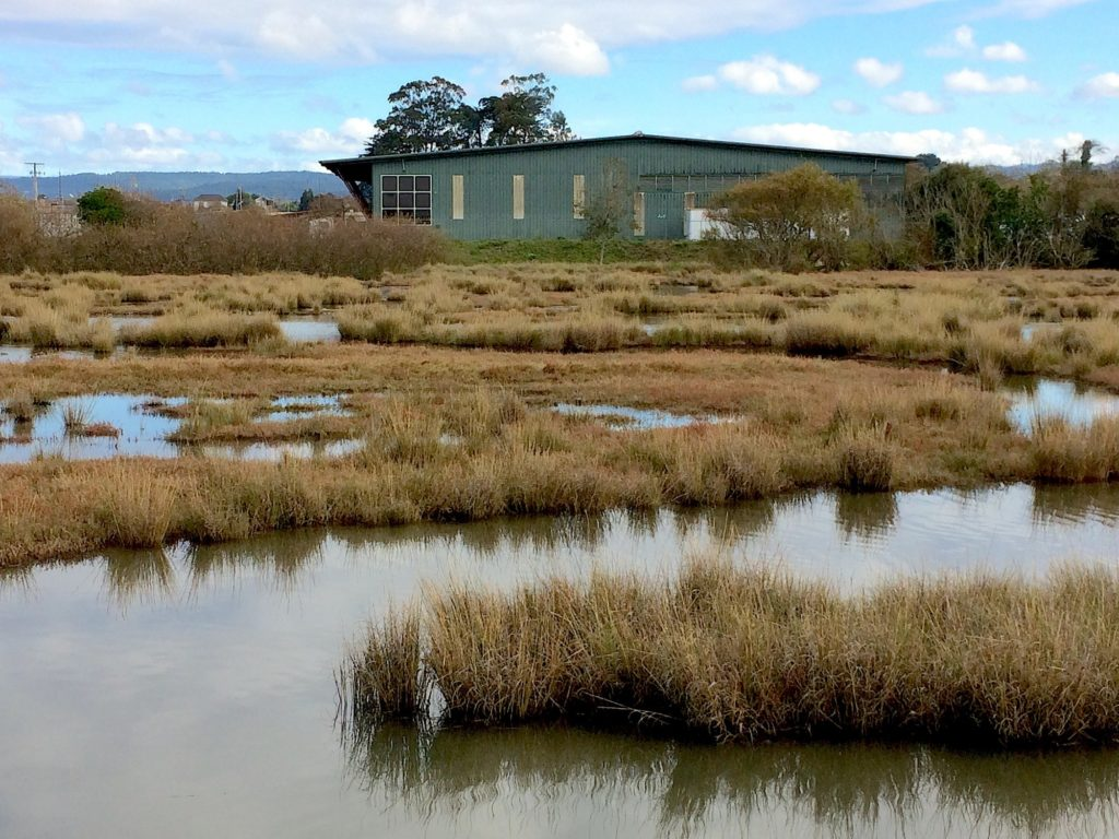Humboldt Baykeeper's successful legal action against the local waste management authority's Hawthorne Transfer Station will reduce pollutants in stormwater discharges into a Humboldt Bay saltmarsh.