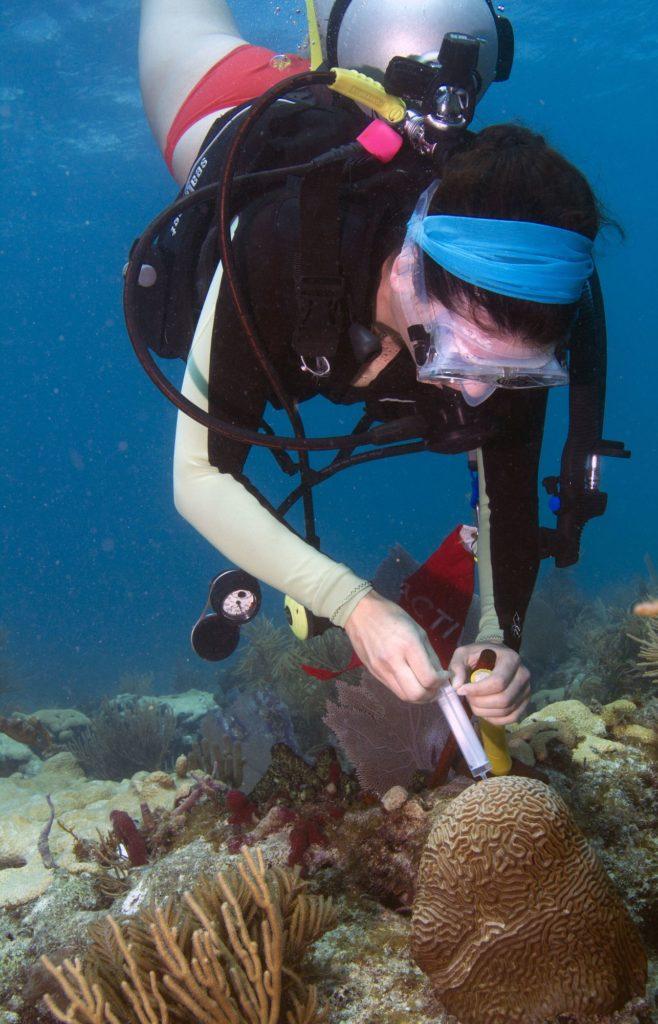 Une femme plongée sous-marine pour recueillir des échantillons de corail.