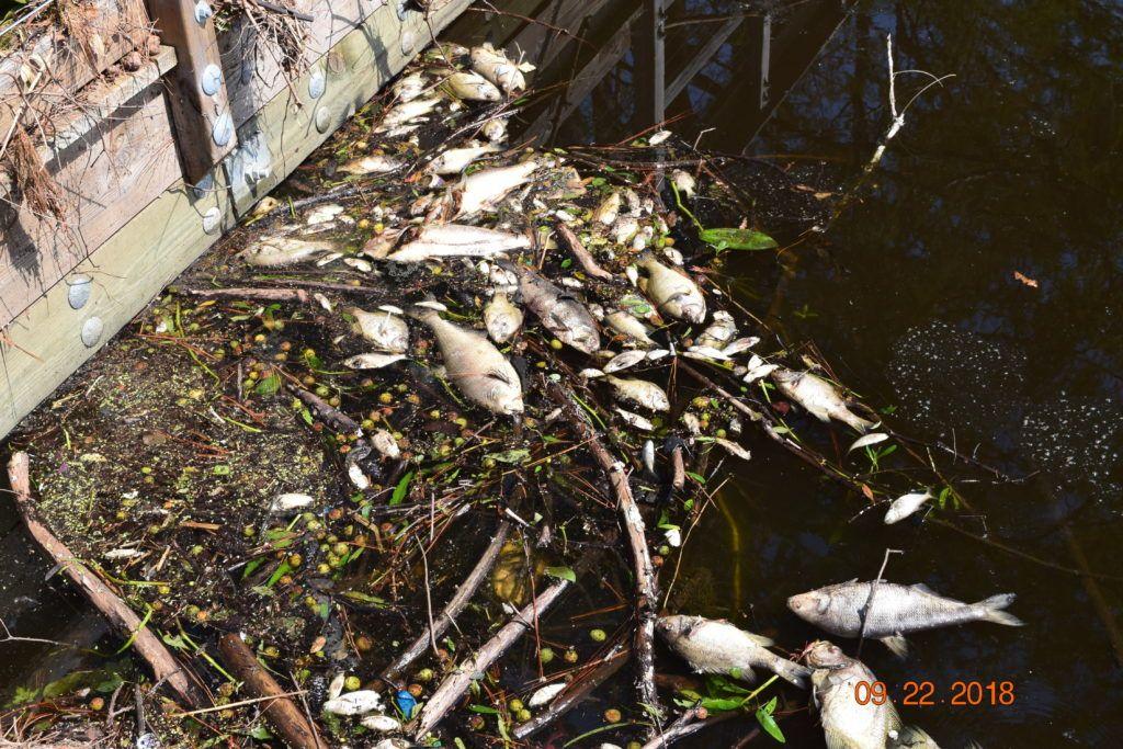 A Fish Kill on Greenfield Lake - Waterkeeper Alliance