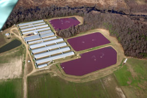 A typical hog CAFO, with cesspools of hog waste next to the facilities.
