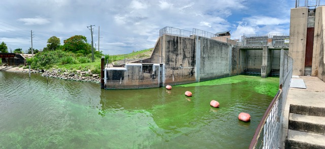 Current cyanobacteria bloom in one of the canals that can bring Lake O water to the Lake Worth Lagoon.