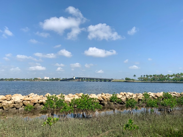 Lake Worth Lagoon in Everglades, Jewell Cove, a living shoreline project we maintain through an agreement with ERM.