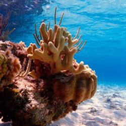 Coral reefs at Lighthouse Point in The Bahamas, currently threatened by Disney.