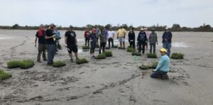 Save the Bay volunteers plant salt marsh grasses at Quonnie Marsh in Rhode Island. Photo by South County Coastkeeper David Prescott.