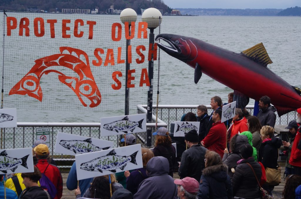 Puget Soundkeeper often collaborates on rallies like this one held in the Spring of 2017 in support of the Salish Sea. Increased oil transport in the Salish Sea is an unacceptable threat to waterways, communities, and the endangered local orca population. Pipelines, oil trains, and increased tanker traffic all put natural resources in danger.