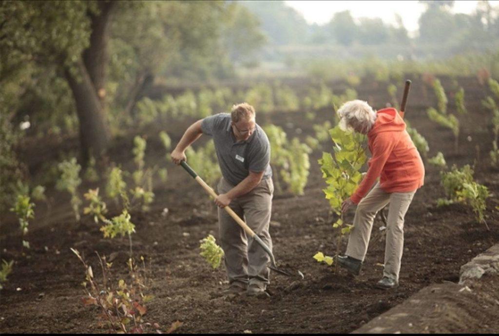 Buffalo Niagara Riverkeeper staff plant trees at a habitat restoration project along the Buffalo River.
