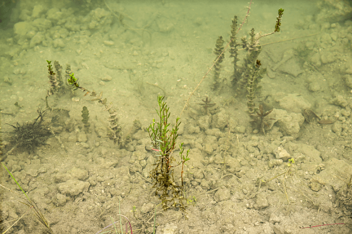 The mostly barren sea bottom of Turkey Point's discharge canal.