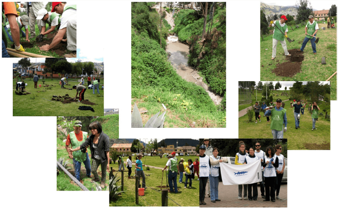 Photos display volunteers working with the Guayllabamba Waterkeeper planting trees in local parks.