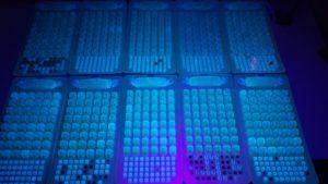 紫外线下的荧光实验室样品。 一排又一排明亮的绿色点被蓝色和紫色阴影包围。