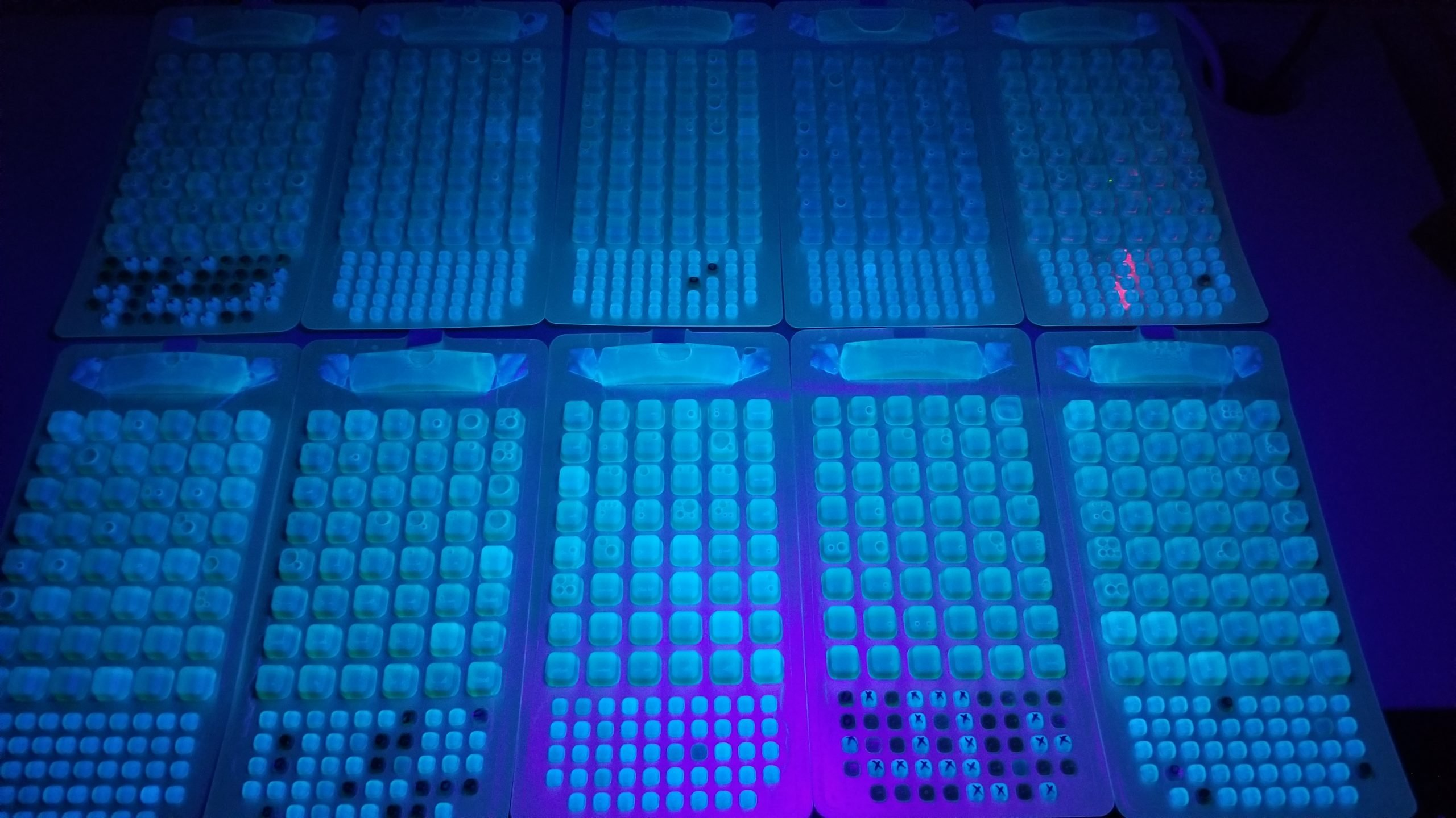Florescent lab samples under UV light. There are rows and rows of bright green dots surround by shades of blue and purple.