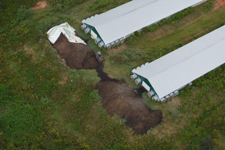 Deux gros tas de litière de volaille brune derrière deux poulaillers dans une exploitation avicole industrielle.