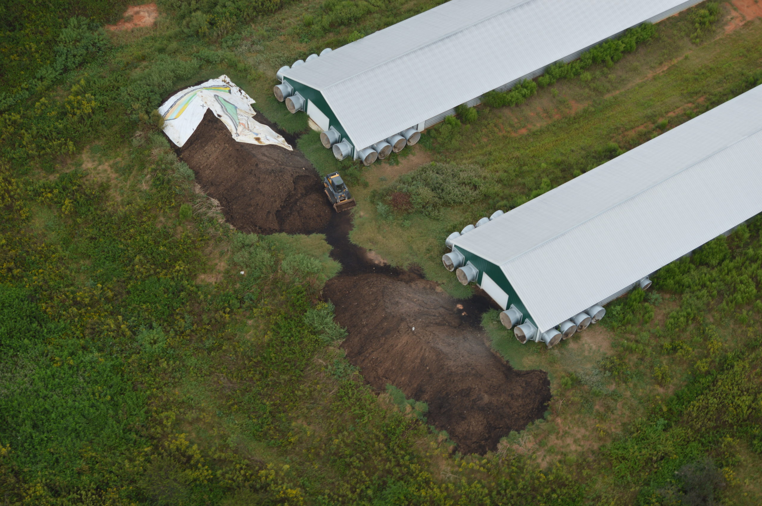 Two large piles of brown poultry litter behind two poultry barns at an industrial poultry operation.
